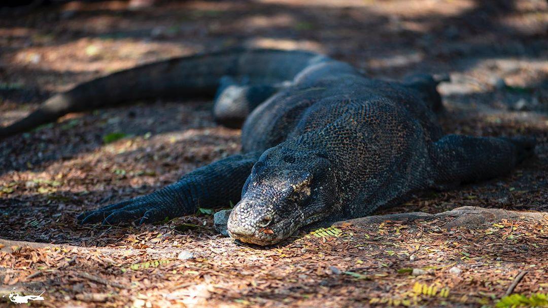 7 Informasi Menarik Tentang Pulau Komodo
